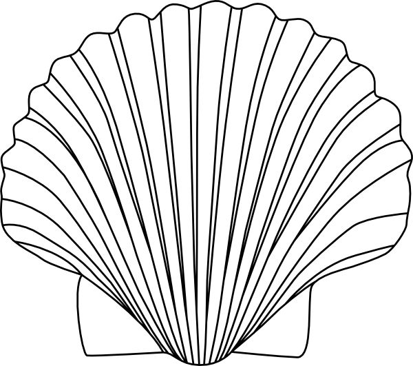 600x531 Seashell Shell Clip Art Black And White Sea Shell Clipart Shells