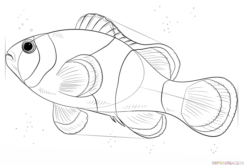 846x575 How To Draw A Clown Fish Step By Step Drawing Tutorials