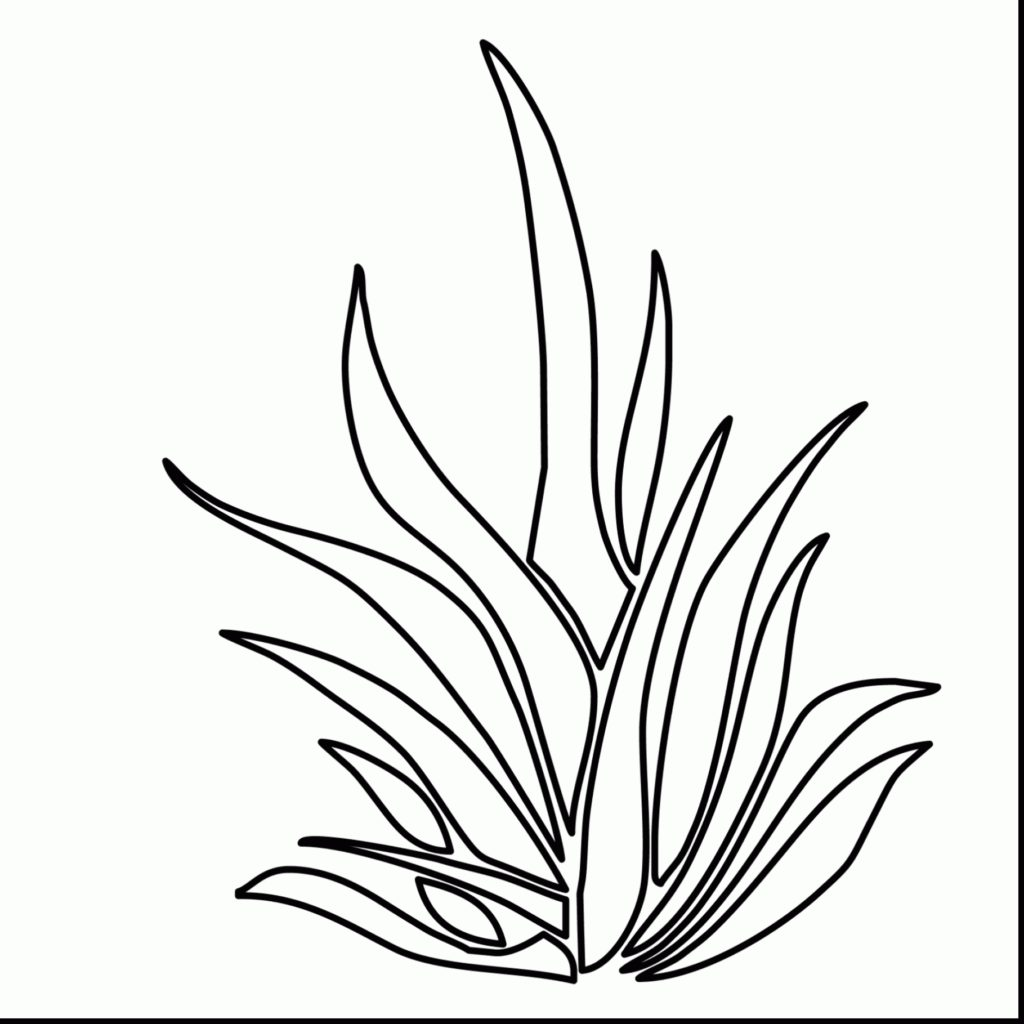 Seaweed Drawing At Getdrawingscom Free For Personal Use Seaweed - Seaweed-coloring-pages
