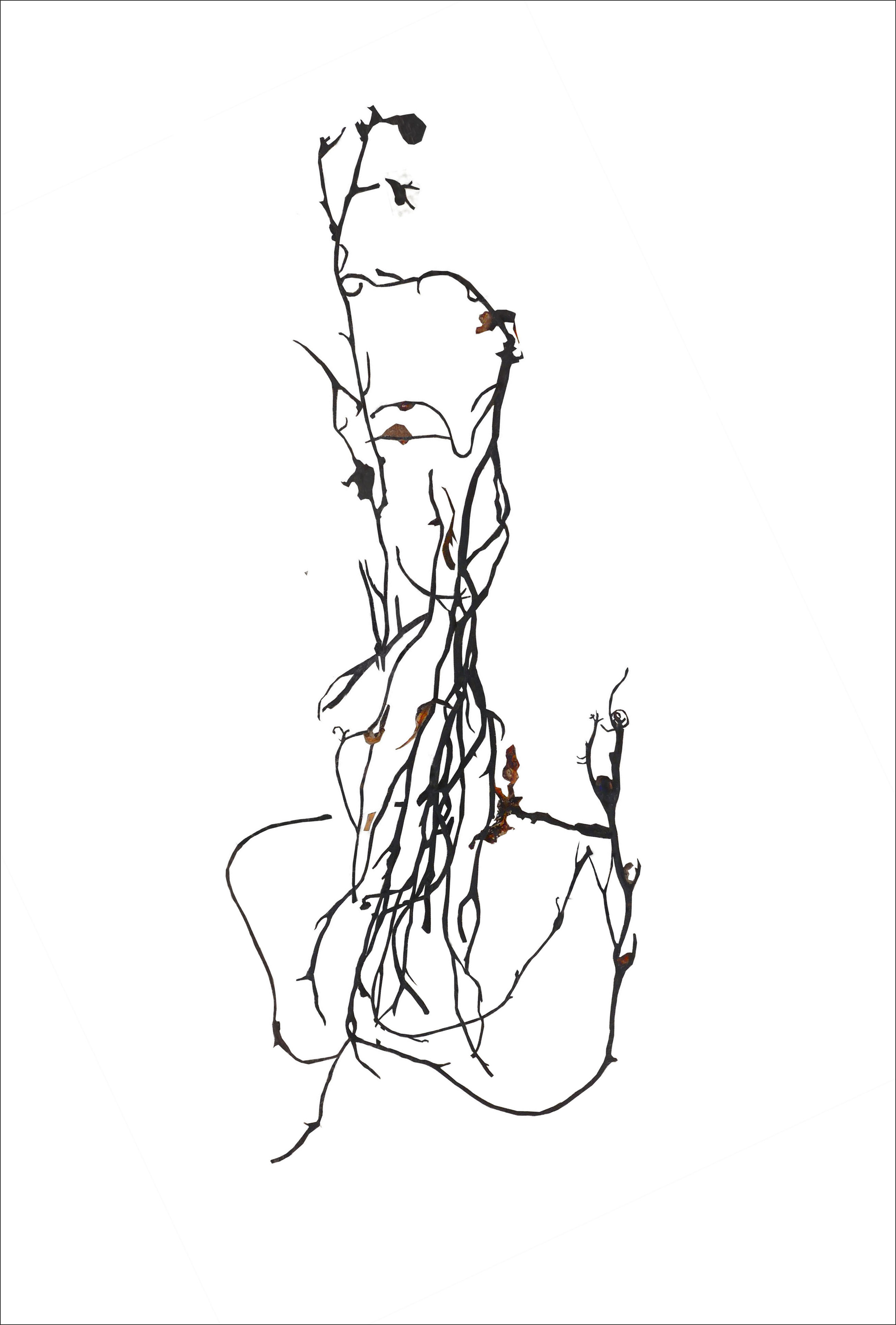 2615x3867 Seaweed Abstract
