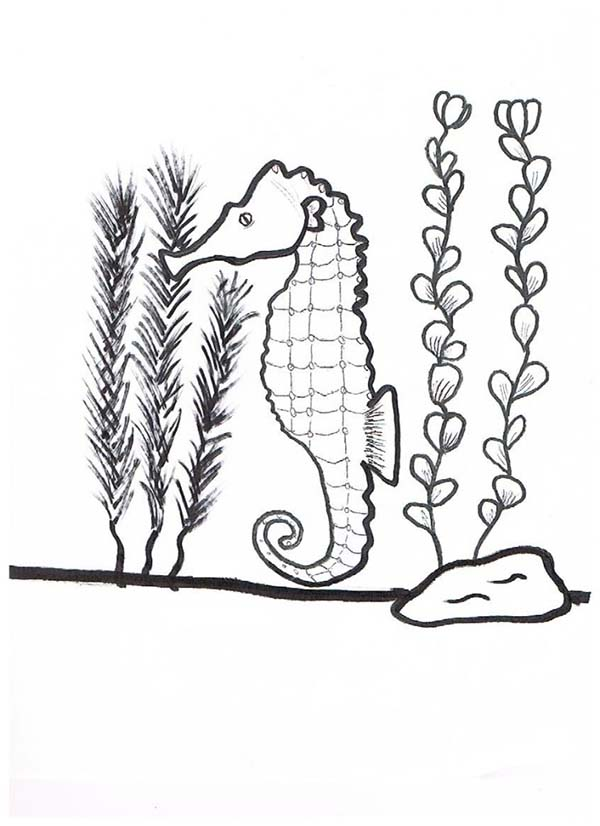600x826 Seaweed Coloring Pages To Download And Print For Free