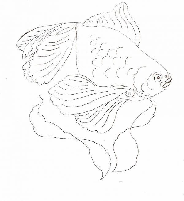 600x658 Simple Animal Drawings For Beginners