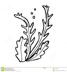 236x252 Seaweed Seaweed Seaweed