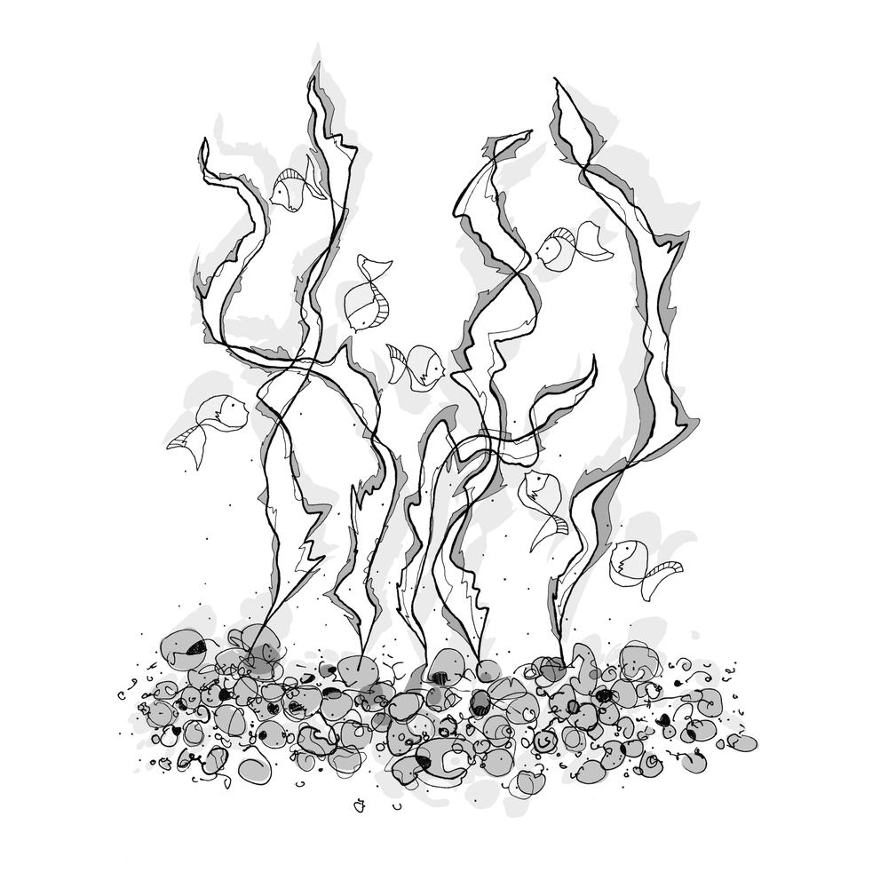1000x1000 Seaweed Drawing