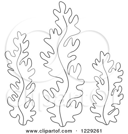 450x470 Clipart Of Outlined Seaweed