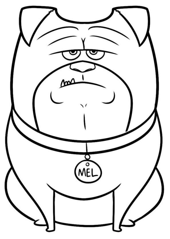 Secret Life Of Pets Drawing