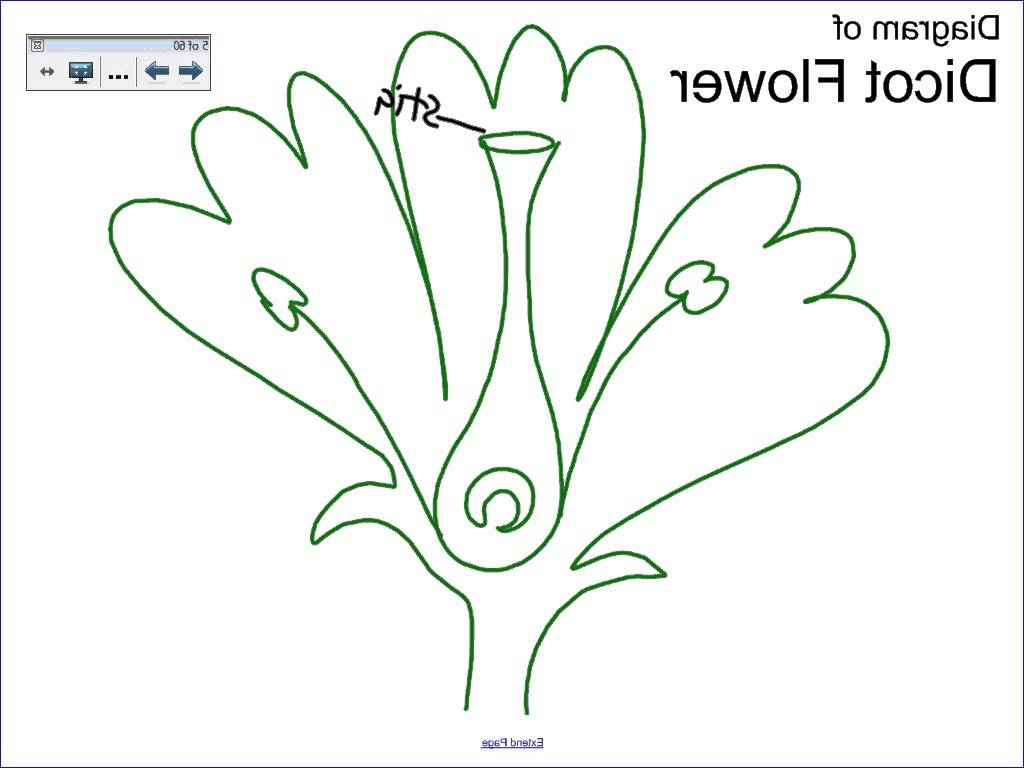 1024x768 Longitudinal Section Hibiscus Draw A Longitudinal Section