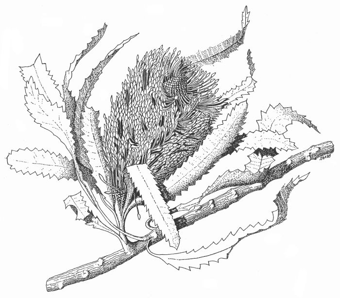 Seed Drawing