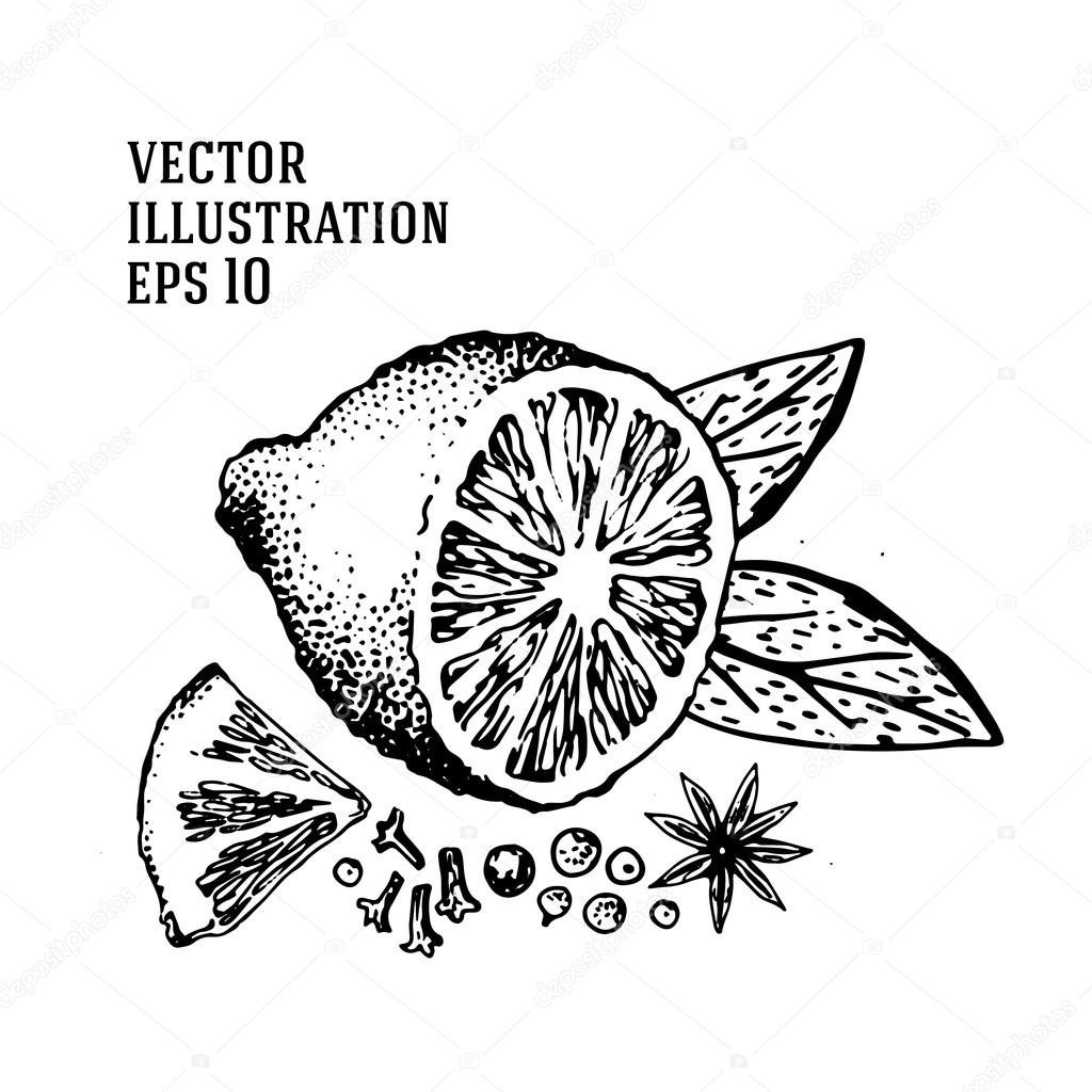 1024x1024 Vector Hand Drawn Lime Set. Half Lime, Sliced Pieces, Leaf, Spices