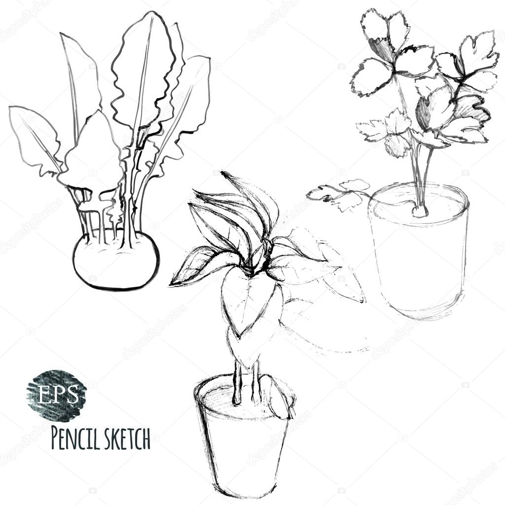 1024x1024 Kohlrabi Cabbage And Seedlings In Pots Stock Vector