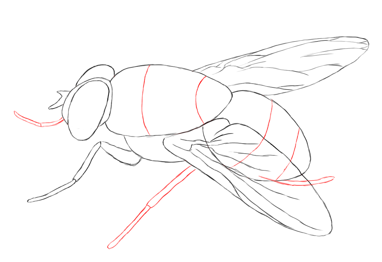 1292x887 How To Draw A Fly