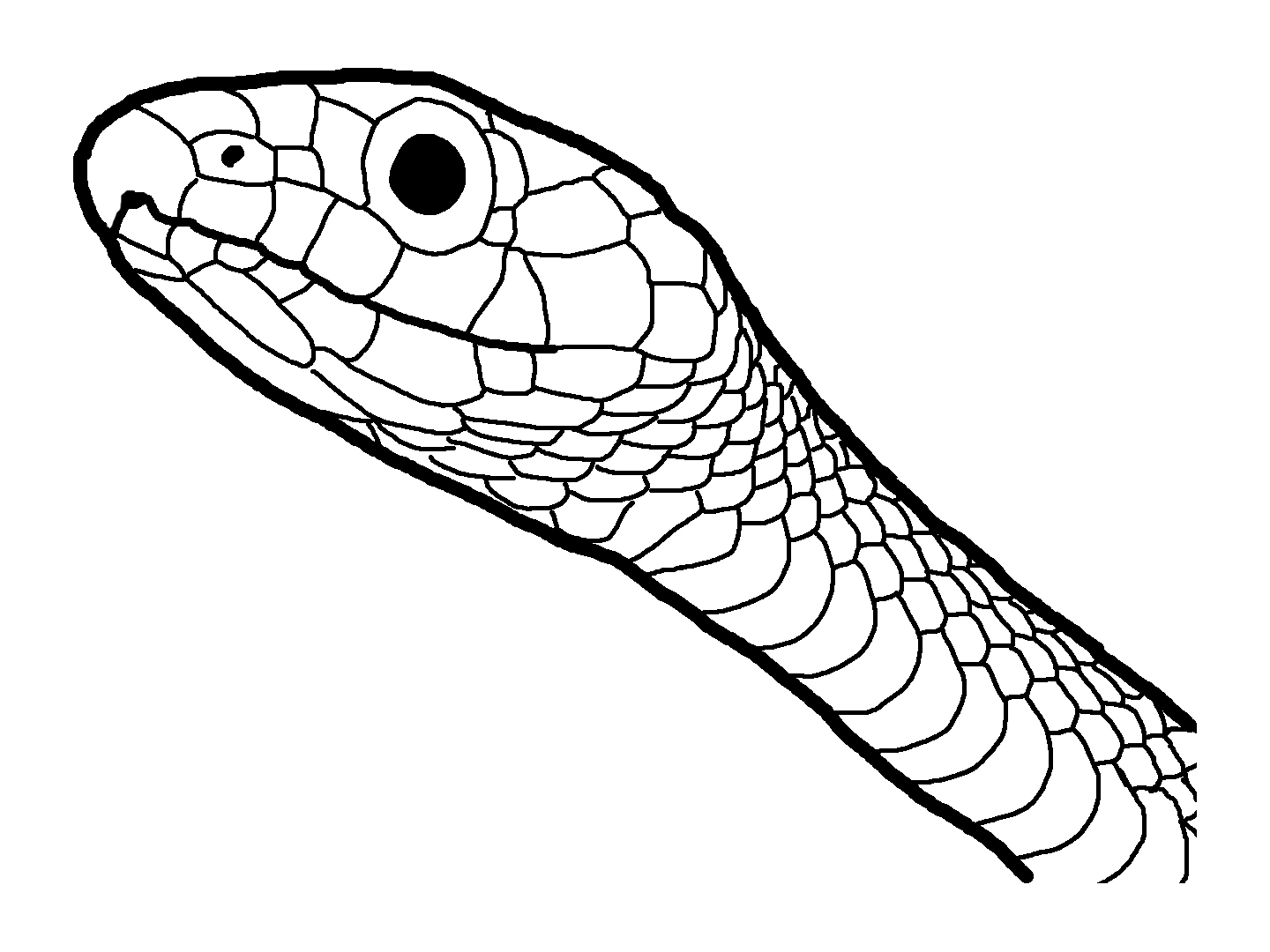 lizard and snake coloring pages - photo#22
