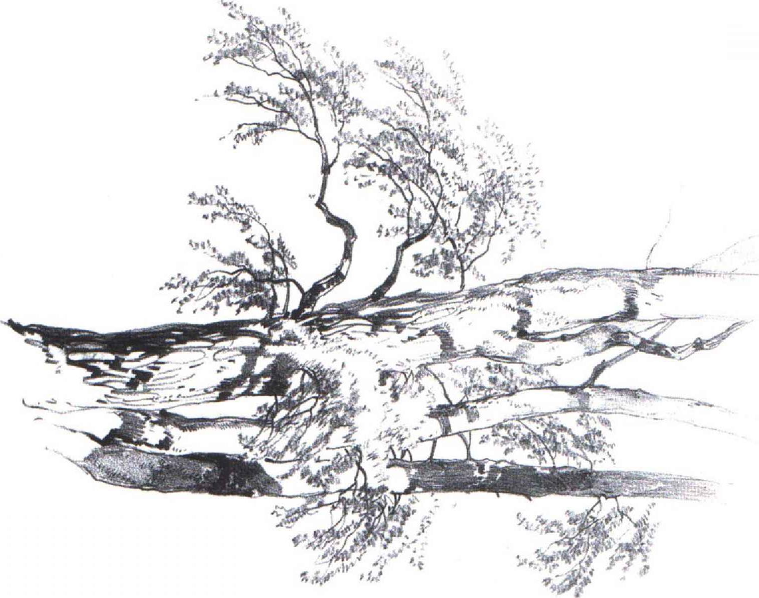 1510x1189 Pencil Black Shading Techniques Nature Pencil Shading Landscapes