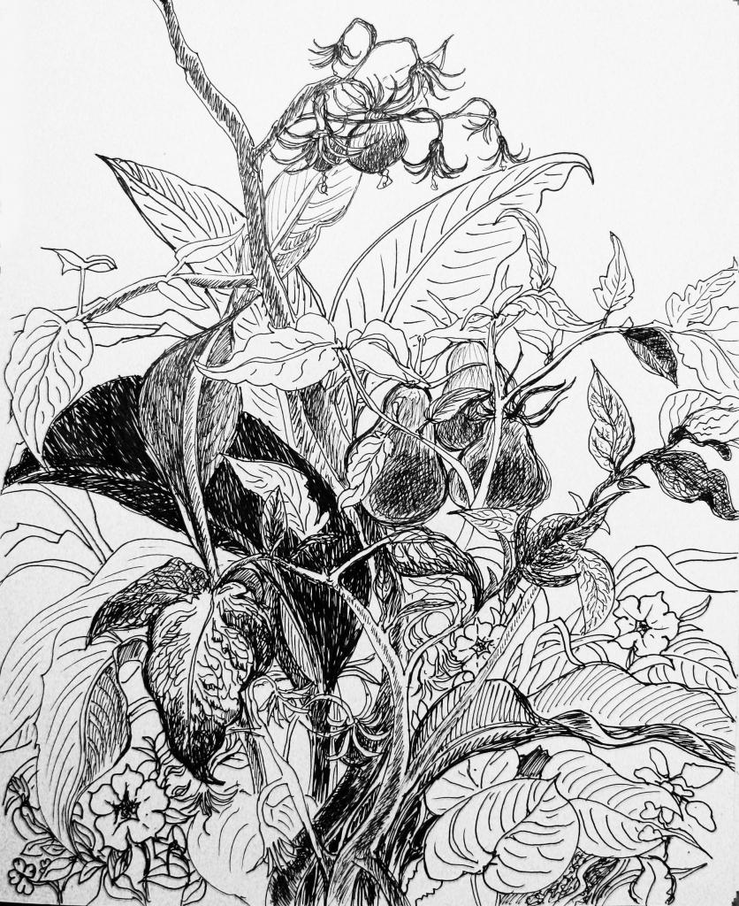 836x1024 Flower Garden In Pencil Draw How To Draw Scenery Of Flower Garden