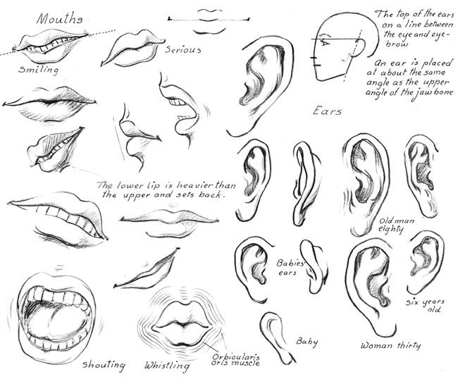 650x538 Sketching Lips, Mouth And Ear From How To Draw Nearly Everything