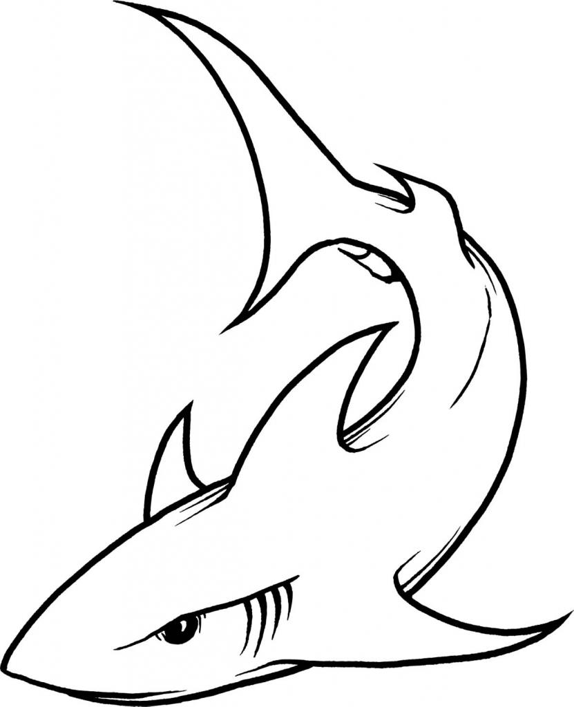 831x1024 Cartoon Drawings Of Sharks Incredible Tiger Shark Tattoo On Back