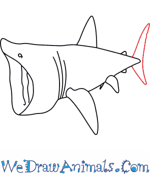 300x350 How To Draw A Basking Shark
