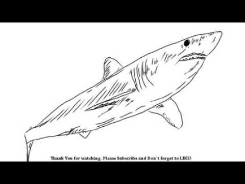 480x360 How to Draw a Shark YZArts YZArts