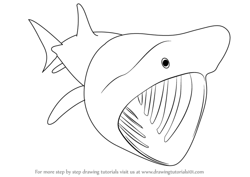 800x566 Learn How To Draw A Basking Shark (Fishes) Step By Step Drawing