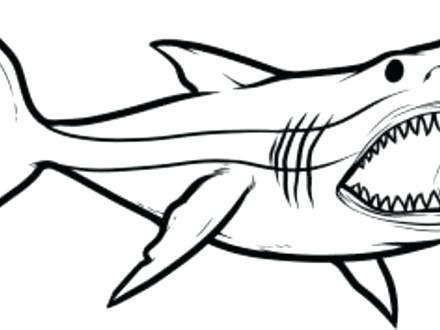 440x330 Megalodon Shark Coloring Pages Shark Great Hammerhead Shark