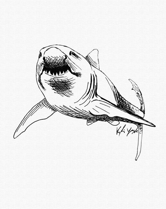 570x720 Shark