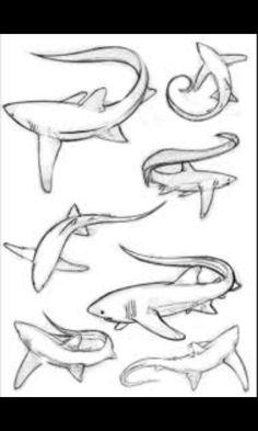 236x393 Cool Shark Drawing Drawing Pinterest Shark drawing, Shark