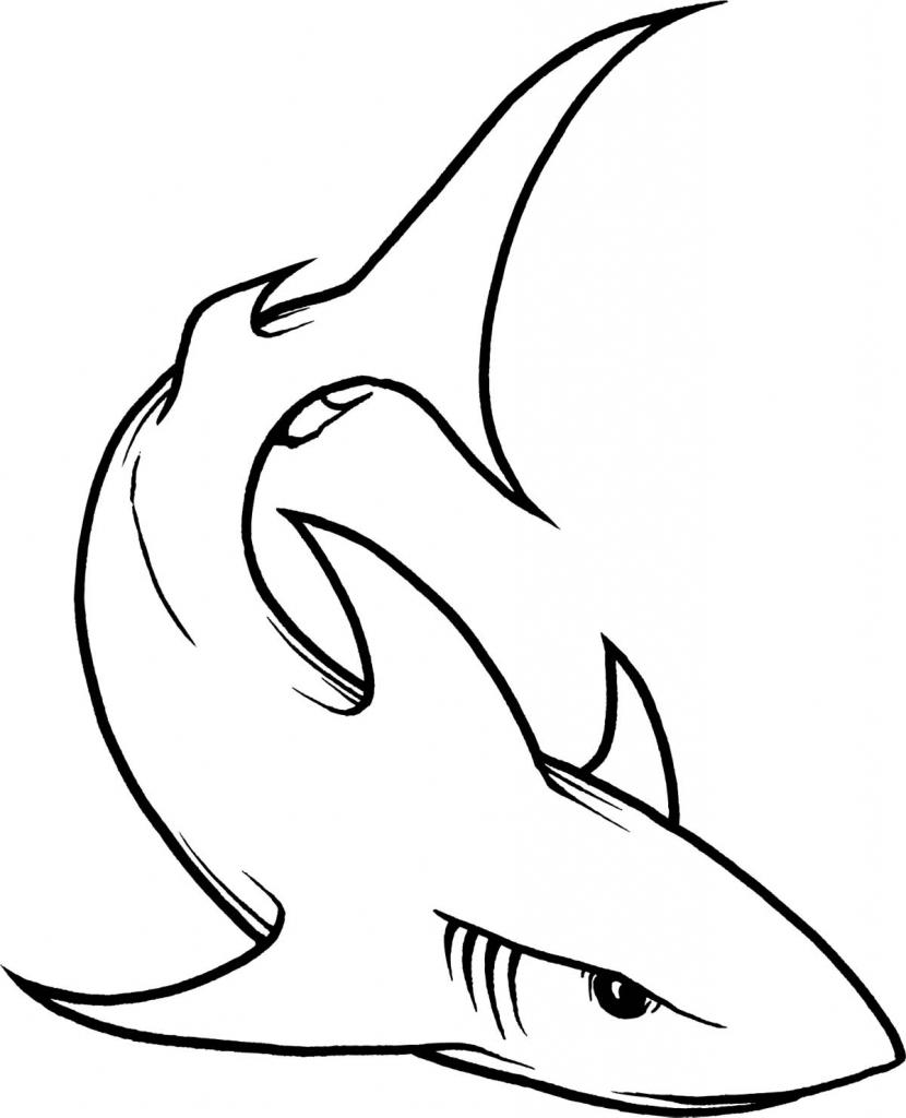 830x1024 Simple Shark Drawing