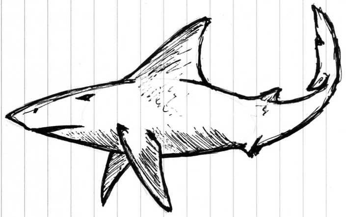 705x443 Great White Shark By Cross Wolf