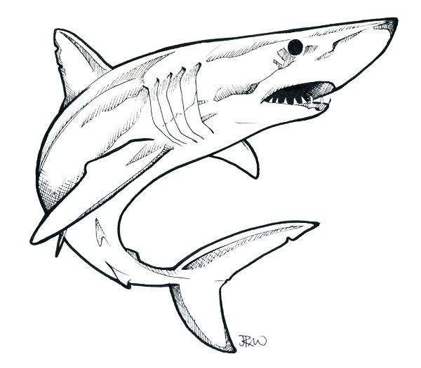 600x525 mako shark