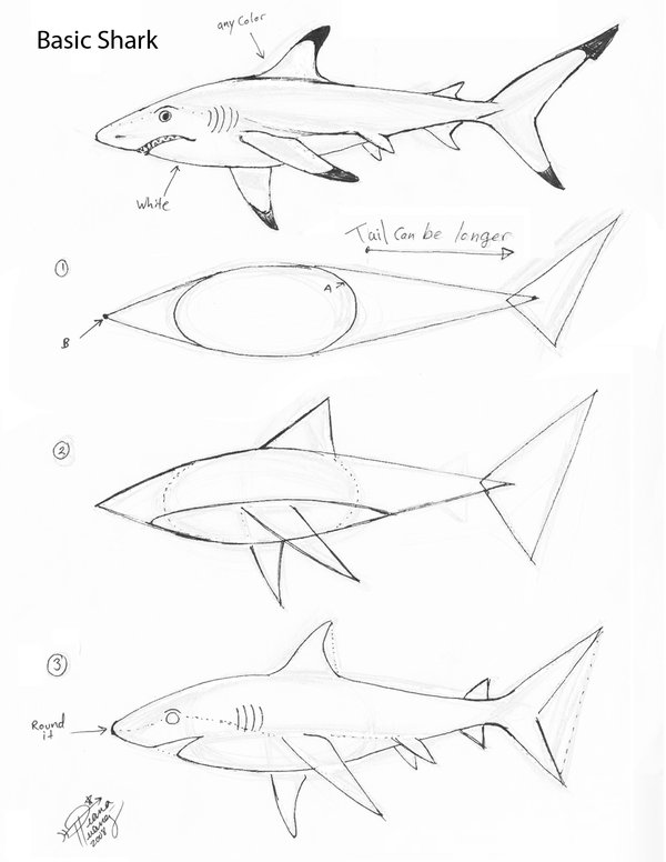 600x776 Draw A Basic Shark By Diana Huang