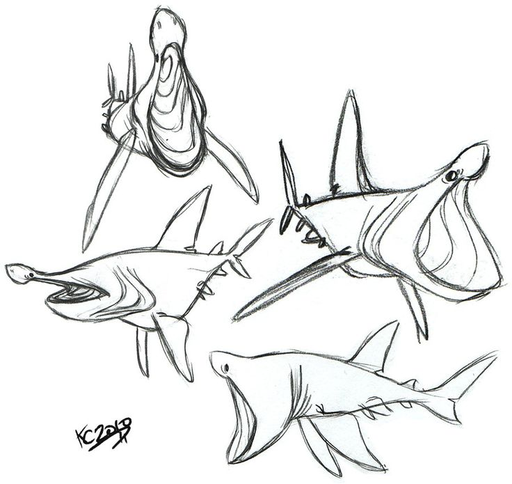 Shark Drawing Cartoon