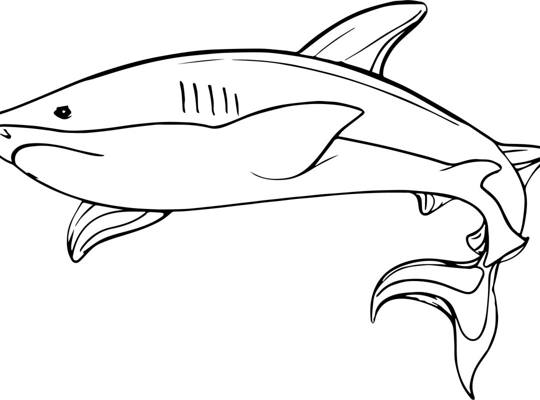 1080x800 Printables Coloring Pages Of Military Shark For Boys Magnificent