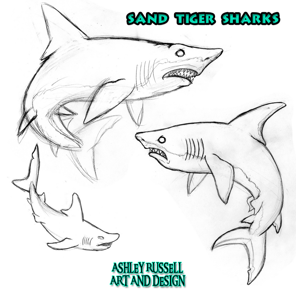 1024x1024 Sand Tiger Shark Character 2014, Graphite On Paper Edited