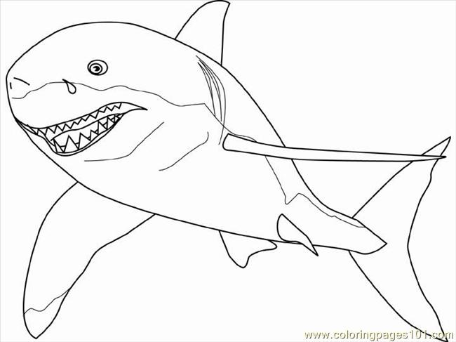 650x487 Easy Great White Shark Pictures To Color Coloring Pages Hellokids