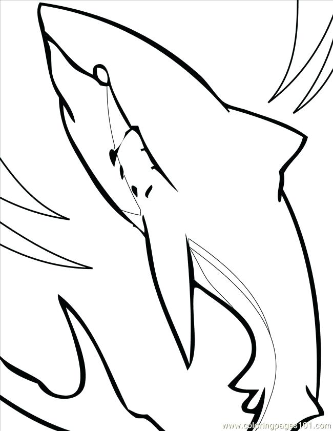 650x841 Megalodon Shark Coloring Pages Shark Great Hammerhead Shark