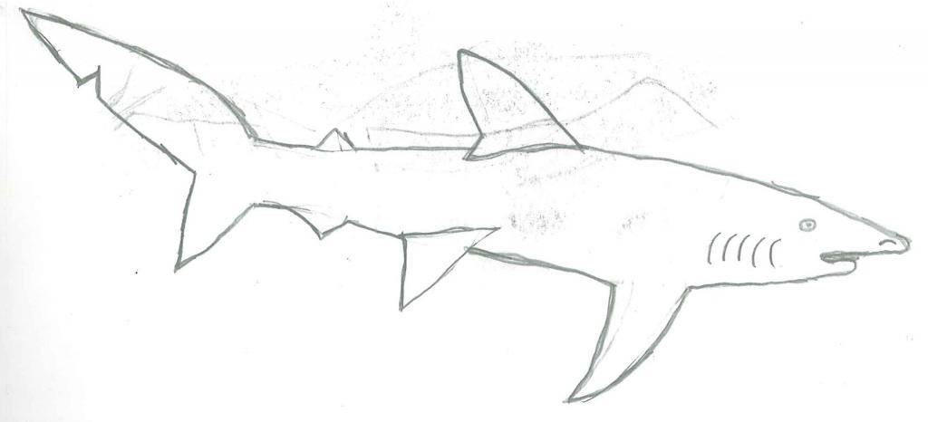 1024x466 How To Draw A Blue Shark Blue Shark Drawing Sharksz77 2016 Feb 11