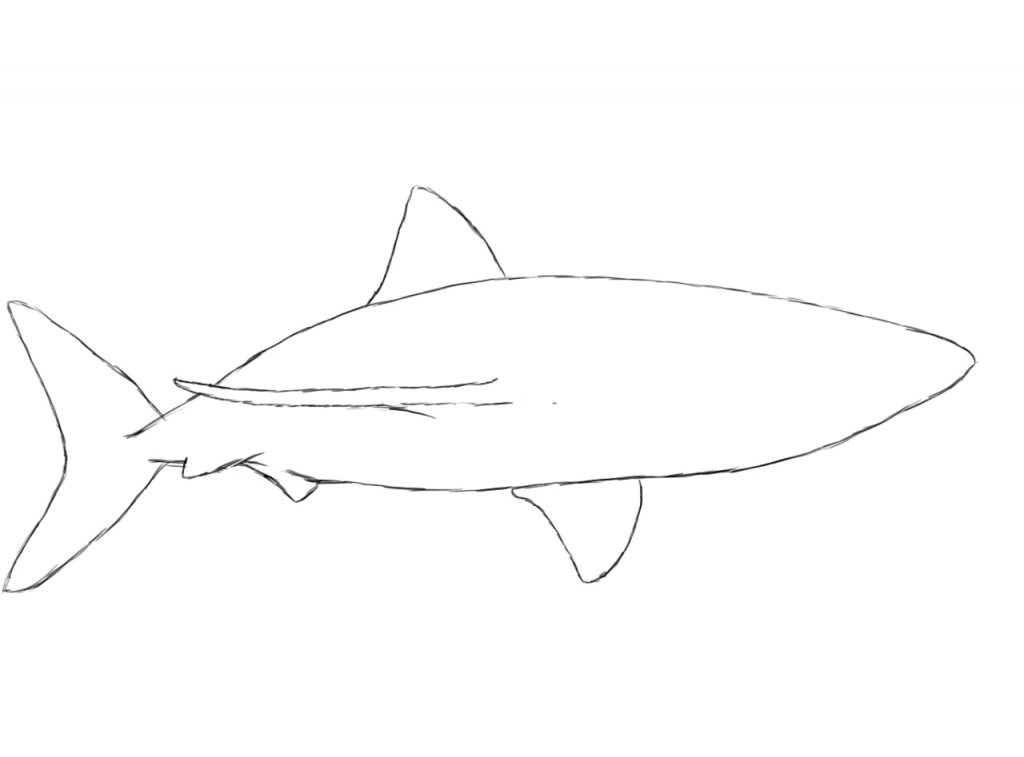 1024x757 How To Draw Sharks How To Draw A Shark Draw Central