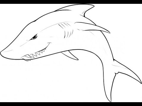 480x360 How To Draw A Shark