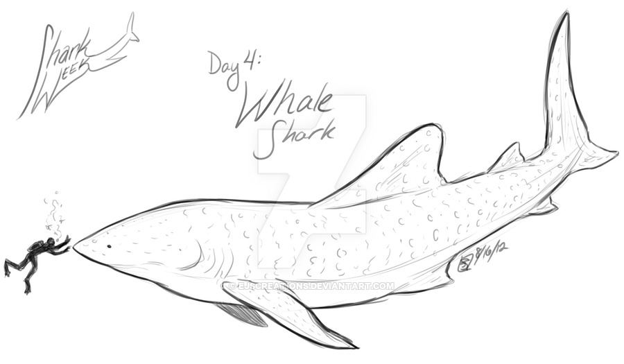 900x525 Shark Week Day 4 Whale Shark By Ejscreations