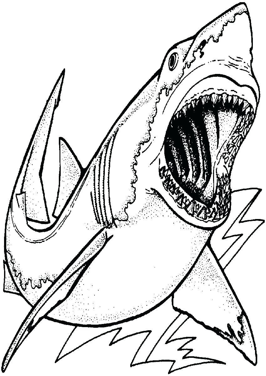 850x1200 Coloring Great White Shark Coloring Pictures To Color Attack