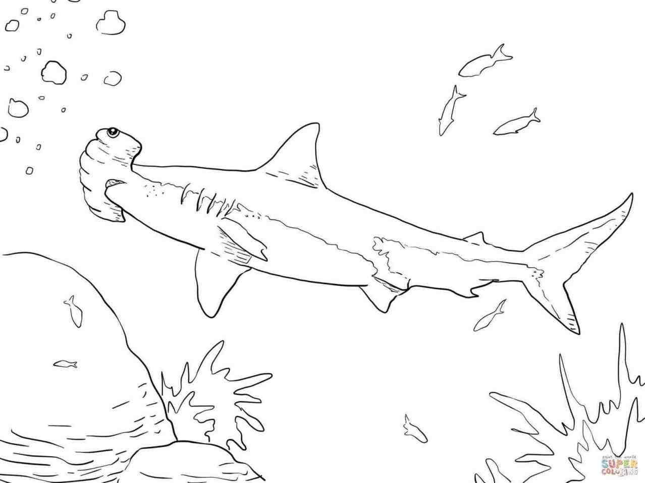 1278x958 Draw Hammerhead Shark. Hammerhead Shark Cartoon Illustration Stock