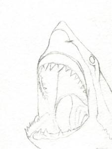 226x302 How To Draw A Shark Head Step 5 Projects To Try