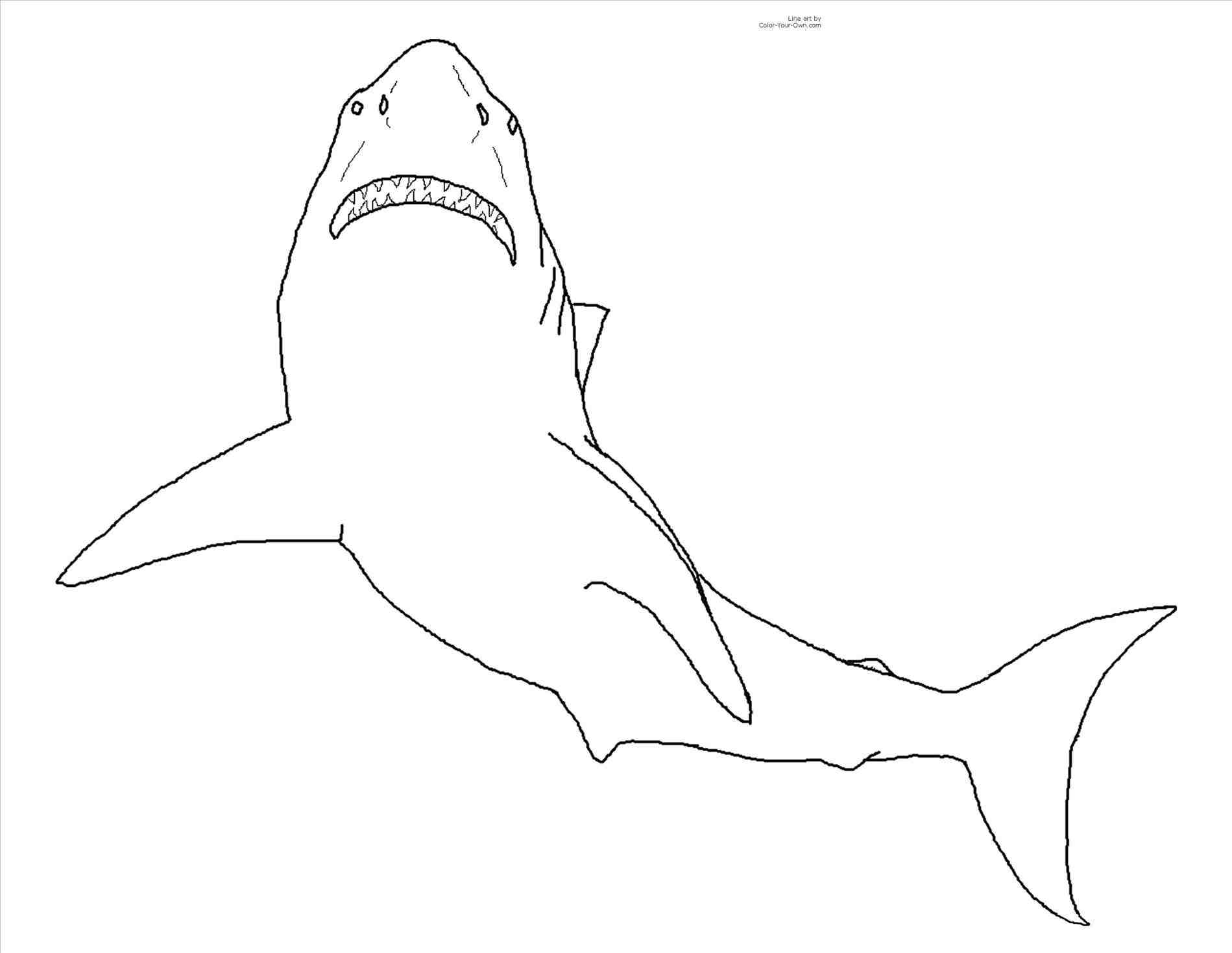 1899x1468 Shark Drawing Looking Stock Vector With Mouth Open Coloring Page