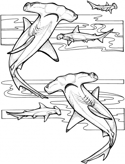 400x525 Hammerhead Shark Coloring Page Shark Collection