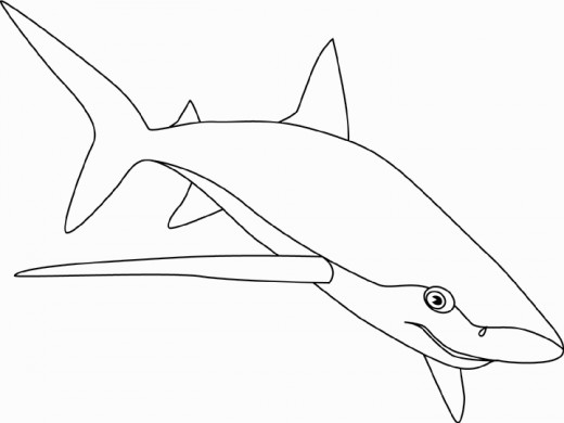 520x390 Pictures Of Sharks For Kids To Color In Shark