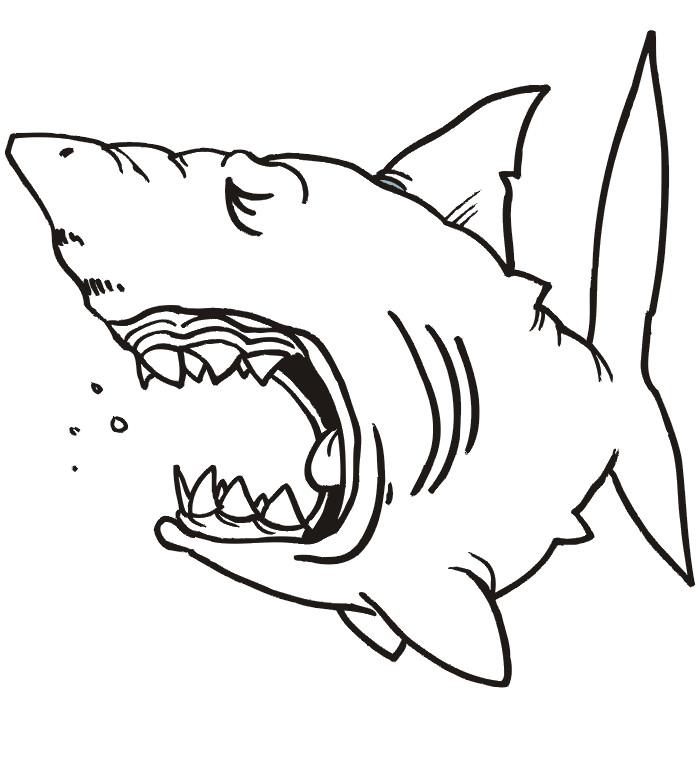 Shark Drawing Template at GetDrawings   Free download