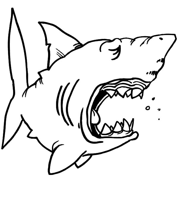 600x670 Chibi Shark Jaws Coloring Pages Best Place To Color