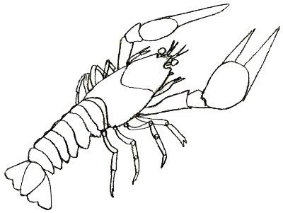 400x301 How To Draw A Lobster