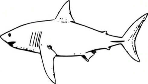 490x280 Bull Shark Clipart
