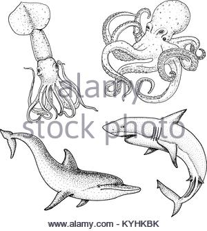 300x334 Drawing Sketch Style Illustration Of A Shark Swimming In Water